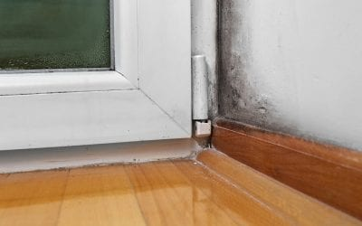 5 Signs Of Mold In The Home