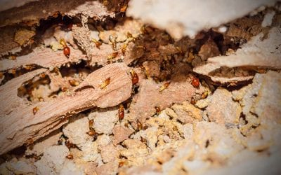 Four Simple Steps to Prevent Termites In the Home